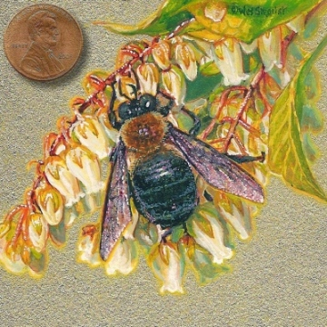 bumblebee painting miniature