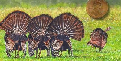 tom turkey fine art miniature painting