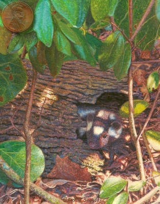 miniature painting skunk painting image