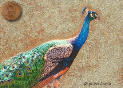 male peacock fine art miniature painting
