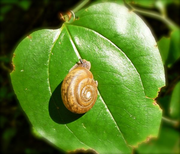 snails of the smokies