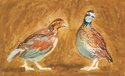 quail painting miniature