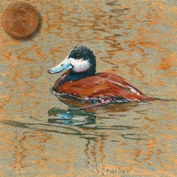 ruddy duck painting