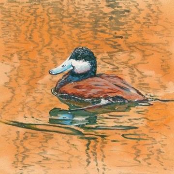 Siegrist Ruddy Duck Painting