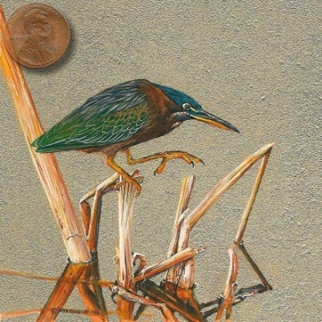 Little Green Heron miniature painting