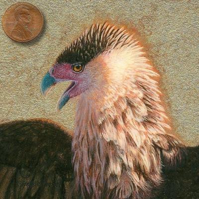 crested caracara miniature painting