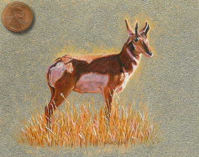 Siegrist miniature painting of a pronghorn