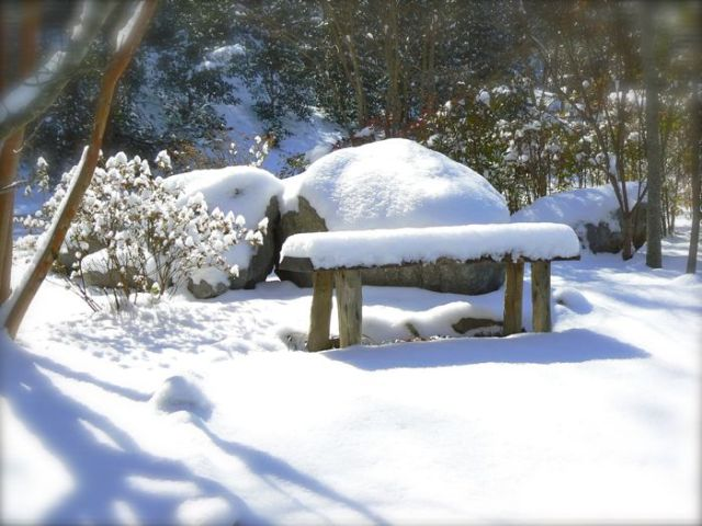 snow covered bench in the smokies