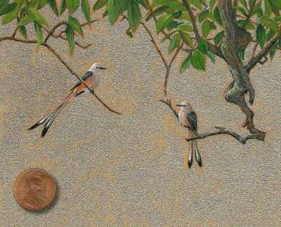 miniature painting of Scissor-tailed Flycatcher by Wes Siegrist