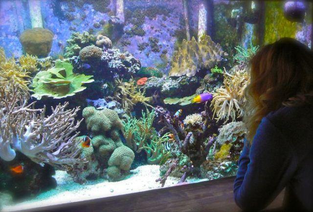 rachelle siegrist at the Oklahoma Aquarium