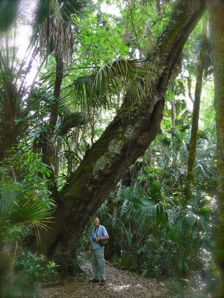 wes siegrist by large tree at highlands hammock