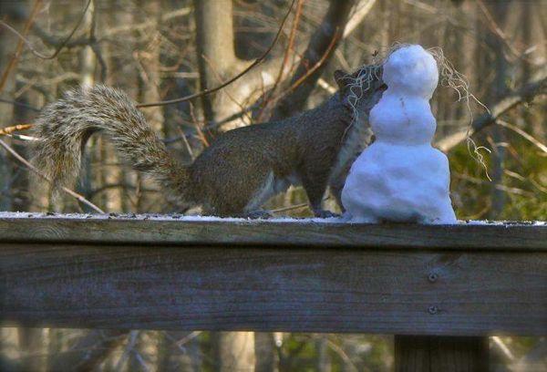 squirrel kissing a snowman