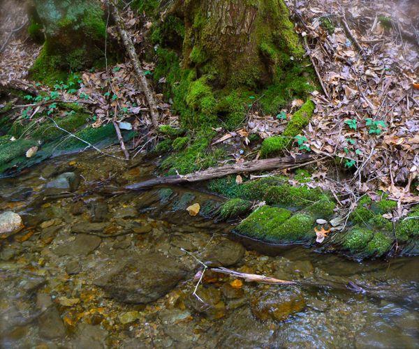 stream along school house gap trail