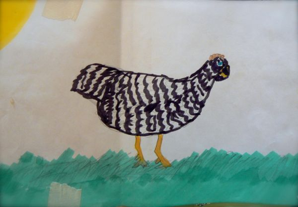 chicken drawing by a child
