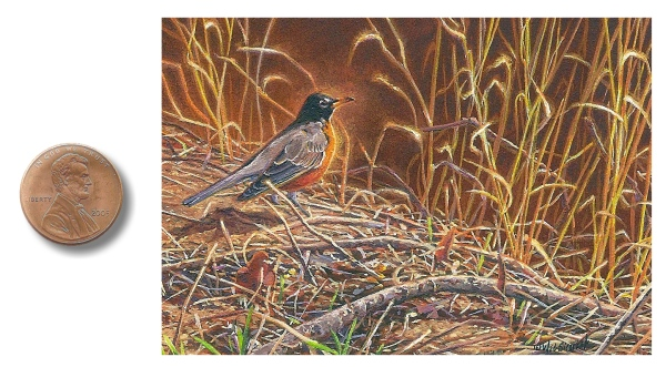 miniature painting of an american robin by Wes Siegrist