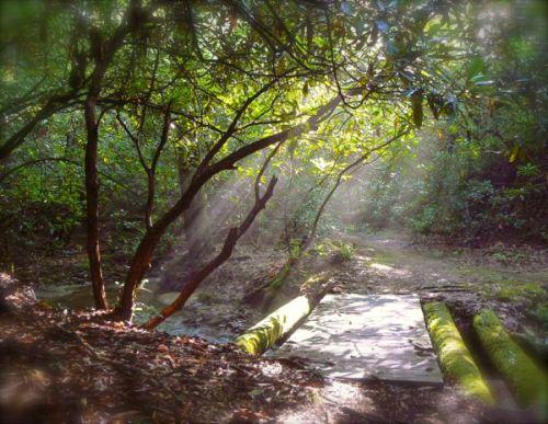 hiking in brevard NC