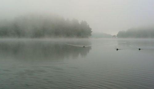 mallard ducks on lake glenville early morning