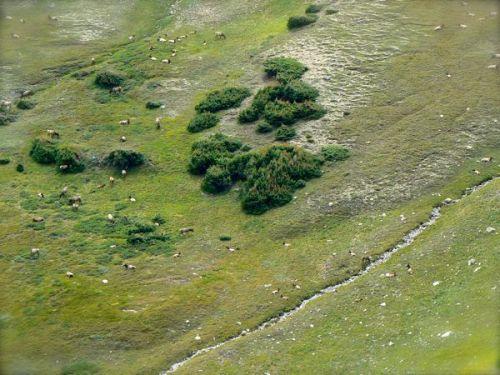 elk herd in rocky mountain national park