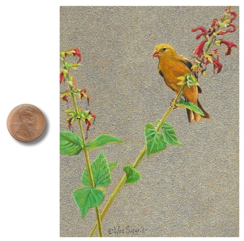 Female Goldfinch painting by Wes Siegrist