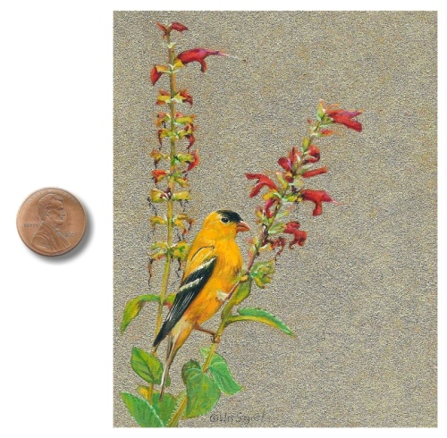 Male Goldfinch painting by Wes Siegrist