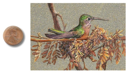 Anna's Hummingbird painting by_Wes_Siegrist1