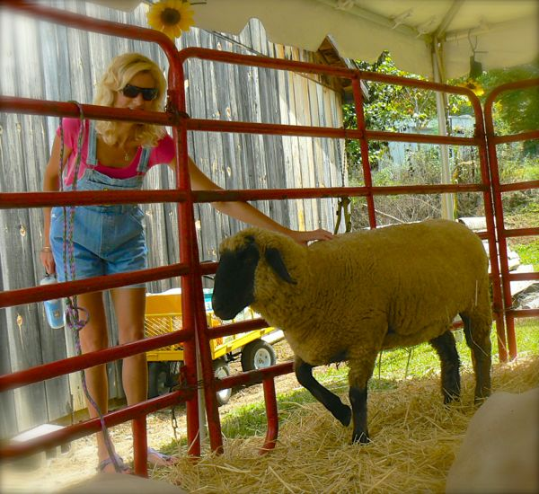 rachelle siegrist and sheep at heritage center