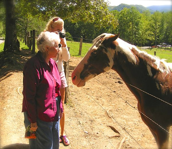 rachelle siegrist photographing horses in cades cove