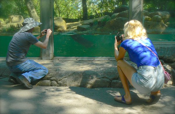 rachelle siegrist photographing otters