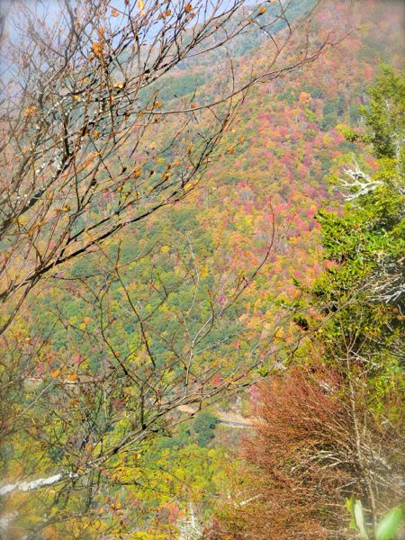 fall color from chimney tops trail