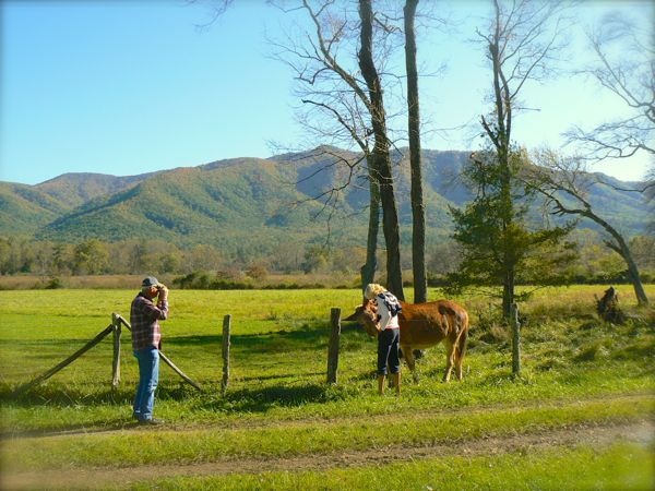 rachelle siegrist with mule in cades cove
