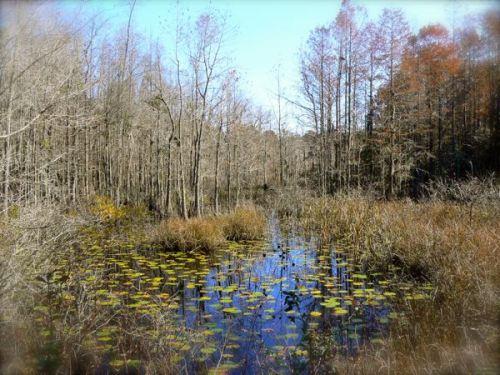 big bay swamp at birdsong nature center