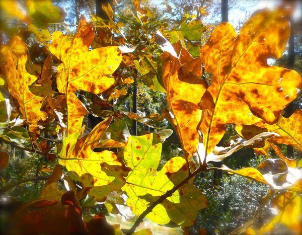 fall leaves at birdsong nature cener