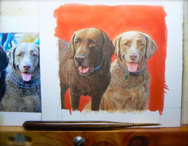 chocolate lab Chesapeake Bay Retriever sporting dog painting by rachelle siegrist