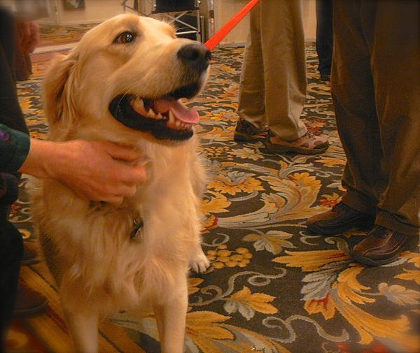 golden retriever at SEWE