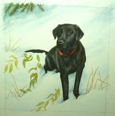 Black Lab painting in progress by rachelle siegrist