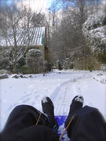 sledding with rachelle siegrist