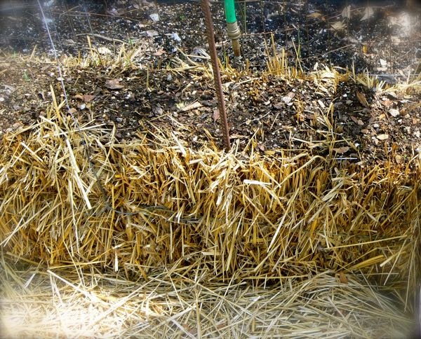 growing garden plants in straw bales