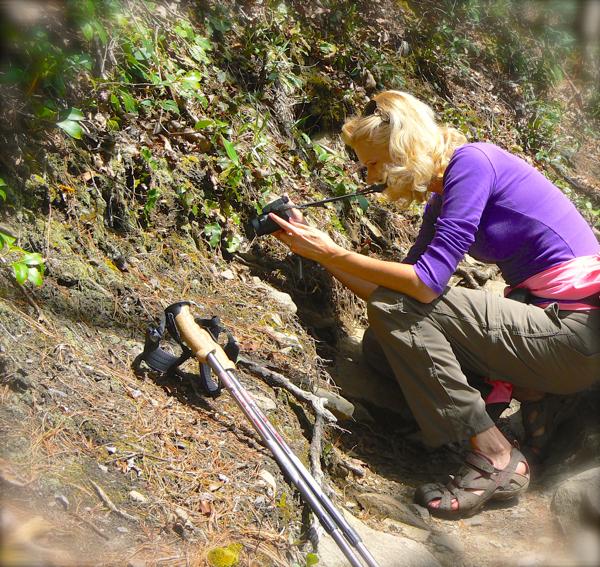 photographing wildflowers in the smokies