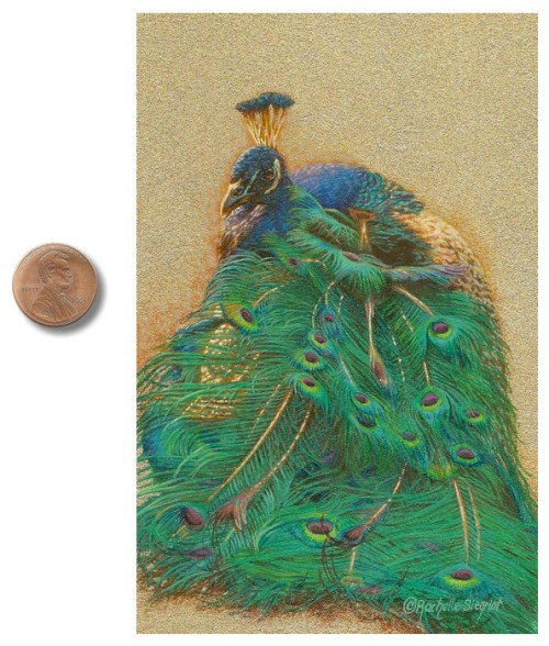 Peacock painting by Rachelle_Siegrist