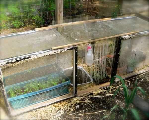 siegrist miniature greenhouse