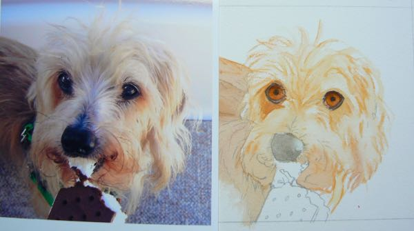 Wirehaired Dachshund painting in progress by rachell siegrist