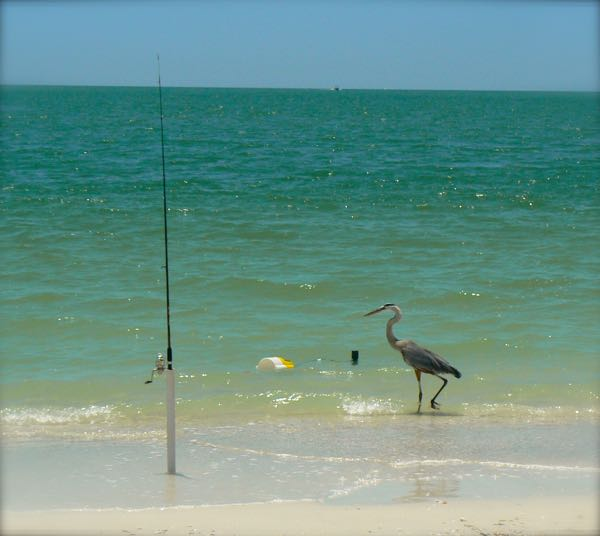 blue heron at lovers key state park