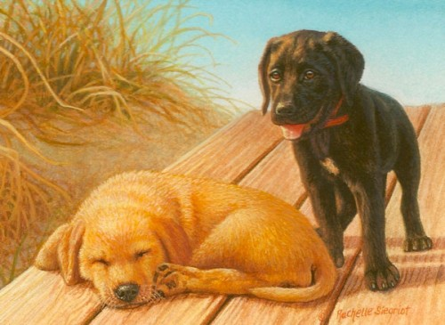 chocolate lab and yellow lab painting by rachelle siegrist