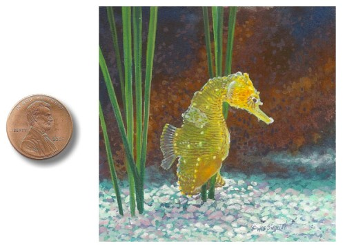 Dwarf_Yellow_Seahorse_painting by_Wes_Siegrist1