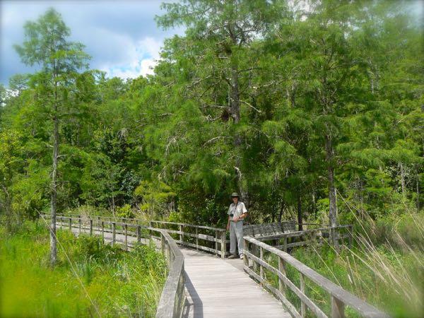 wes siegrist at corkscrew swamp sanctuary