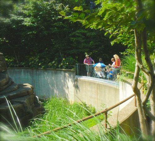 rachelle siegrist watching lemers Louisville zoo 6.15 - 6