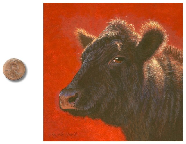 Bovine Beauty Queen miniature painting of an Angus Cow by Rachelle Siegrist