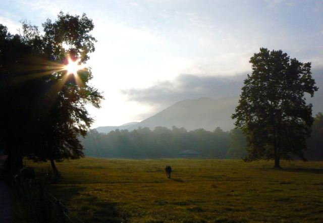 early morning in Cades Cove