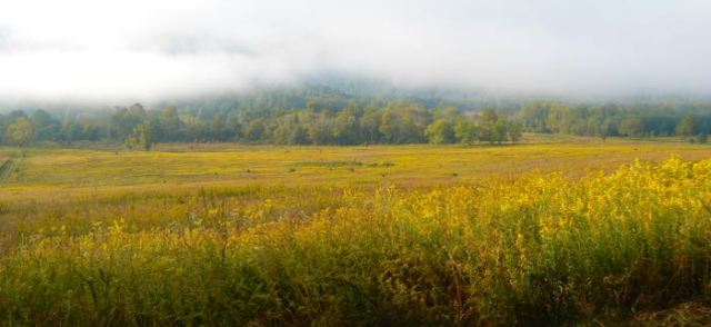 fields of flowers in Cades Cove in fall - 1