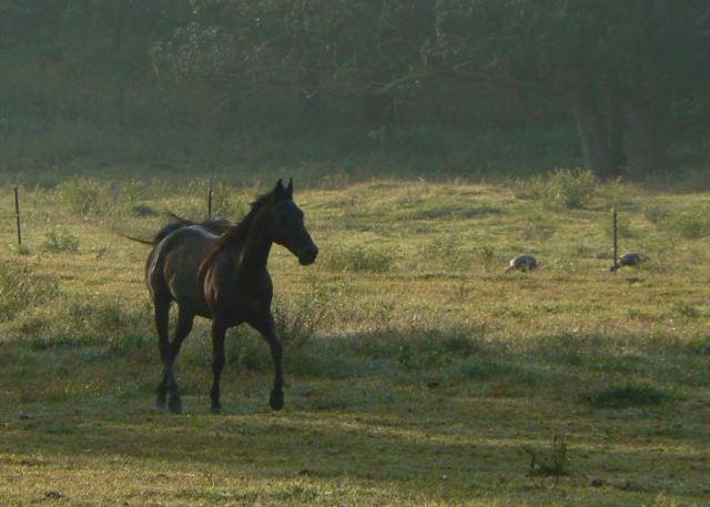 horses in Cades Cove